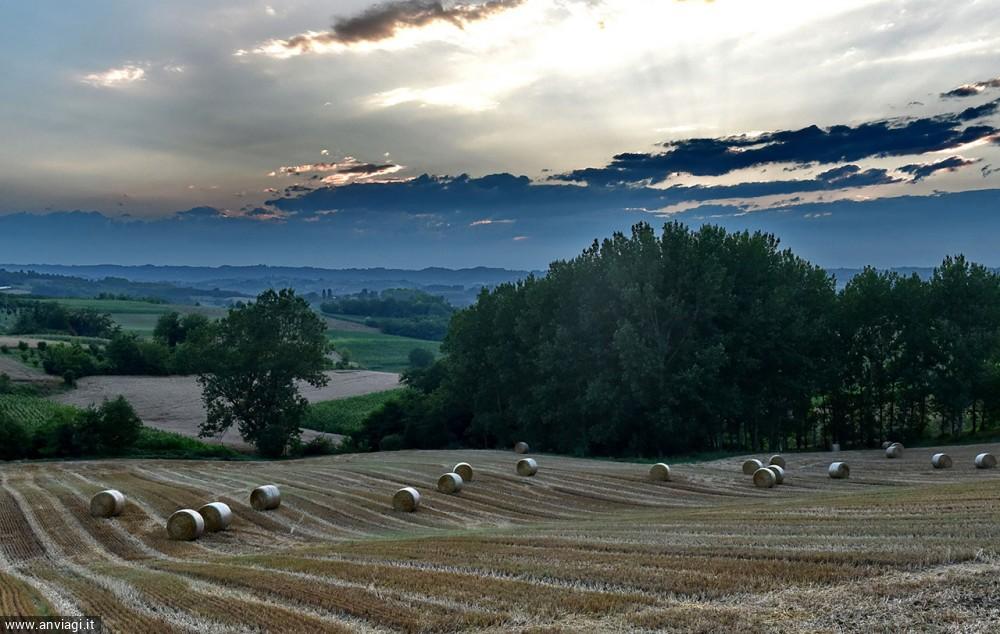 Antignano, campi di grano
